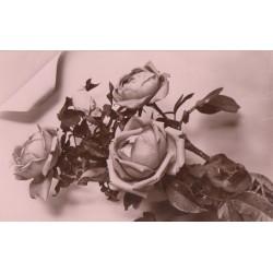 Carte postale - Roses
