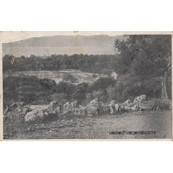 Carte postale - Les oliviers du Cap d'Antibes