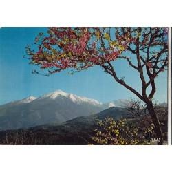 Carte postale - Sur la route de Corte - Au fond, la chaine du Mont Rotondo